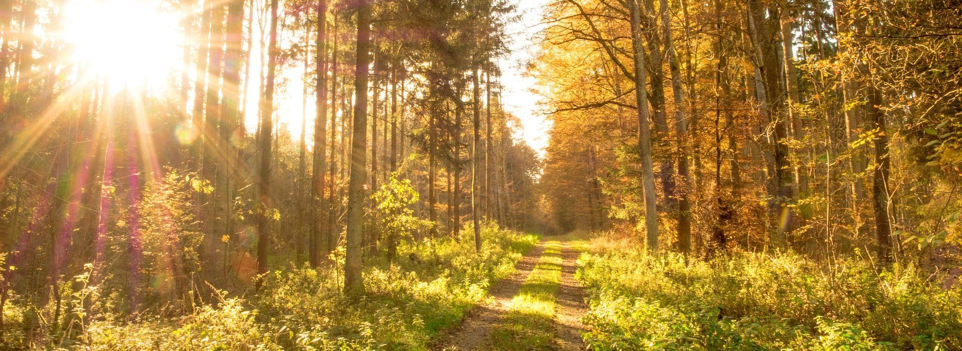 Waldweg mit Sonne 1920x700